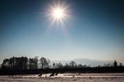 MMČR v ledové ploché dráze 2017